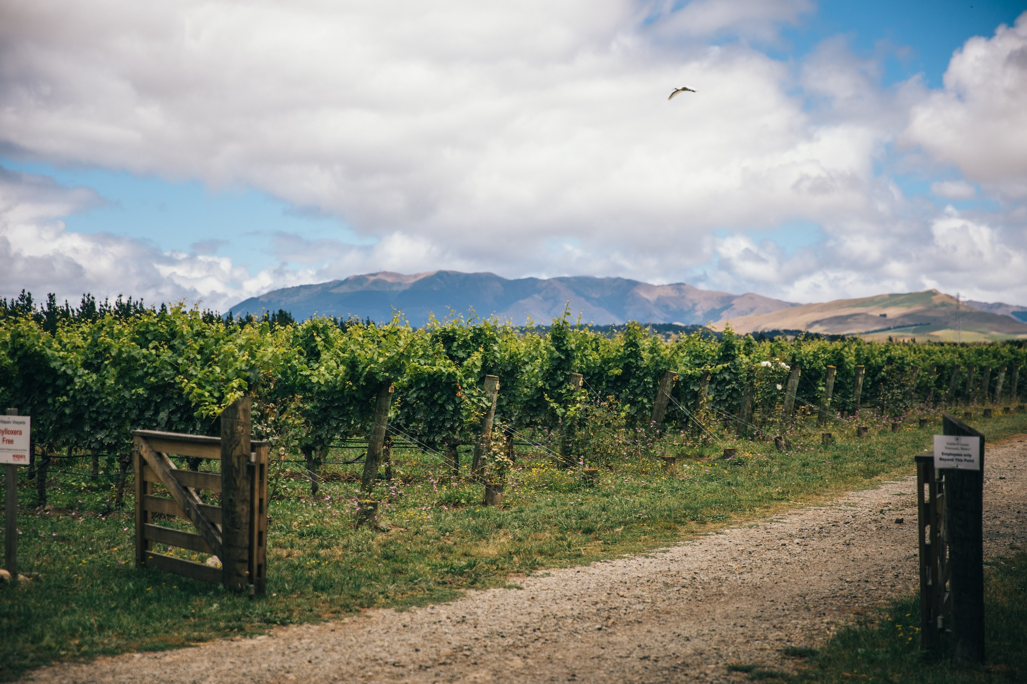 You are currently viewing A summer's day amongst the vineyards of North Canterbury