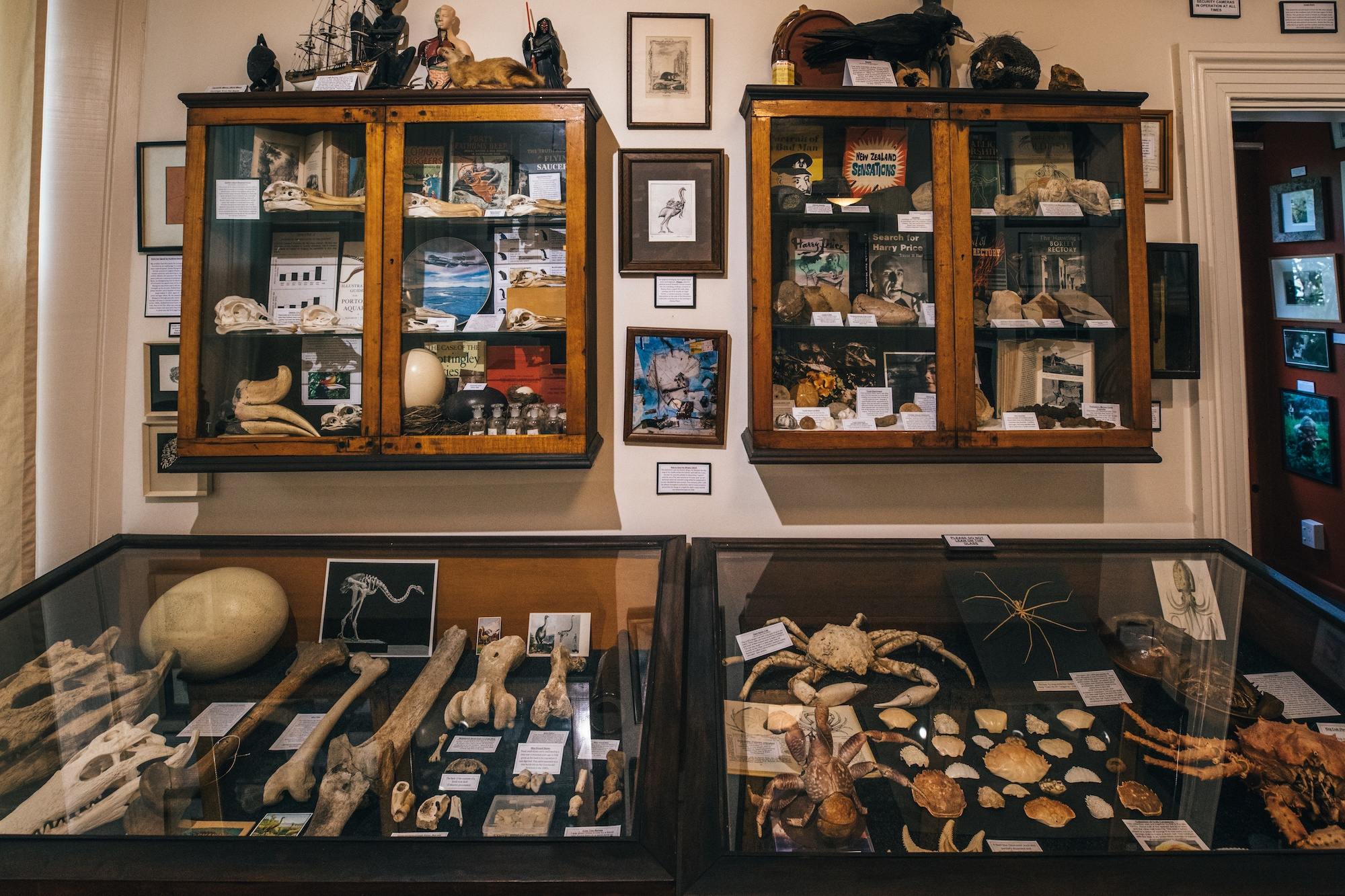 Read more about the article New Zealand's quirkiest museum is full of mystery (and bones)